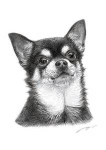 draw scratch pencil_art pets mydoggy freetoedit