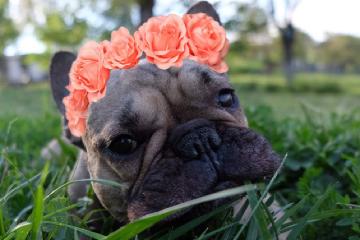 freetoedit flower cute lovingit