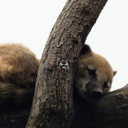 coati animal travel nature photography