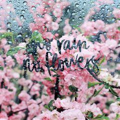freetoedit norainnoflowers flowers rain quote