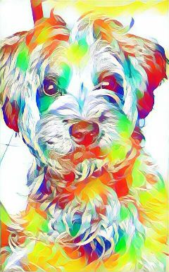doglover dogs colorpaint from and freetoedit