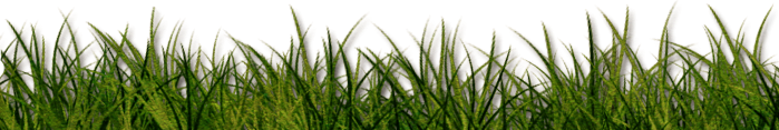grass green armilla pasto freetoedit