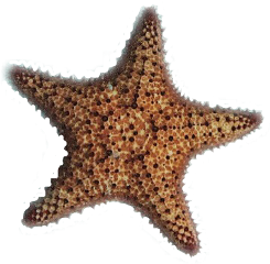 starfish ftesticker