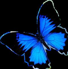 buterfly mariposa blue azul freetoedit