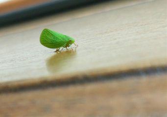 bugslife nature macro