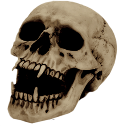 skull100