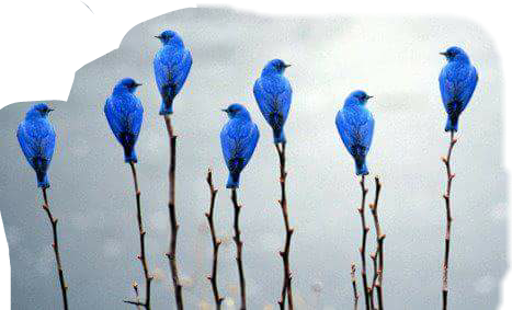 #vögel