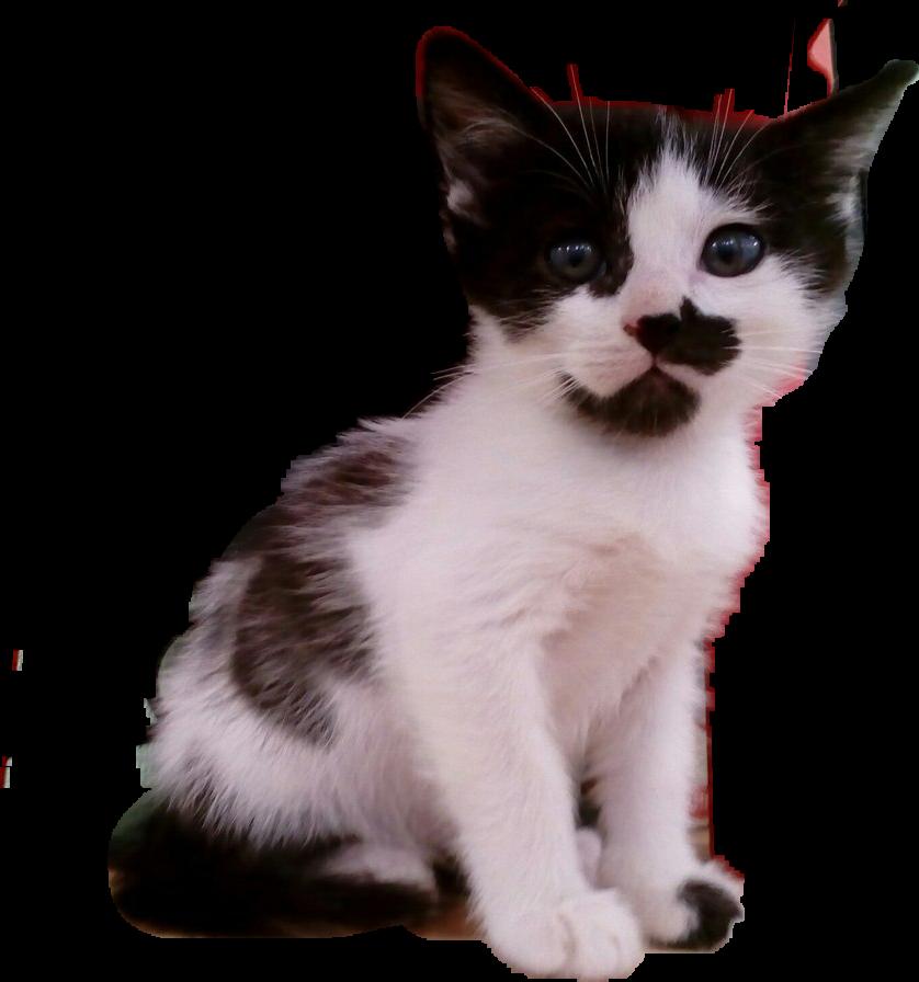##cat
