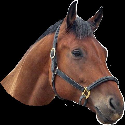 #horse # horses #popart