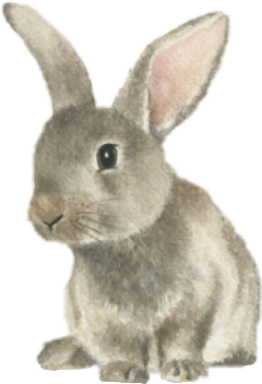 rabbit conejo freetoedit