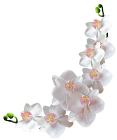 flowers orchid ftestickers freetoedit