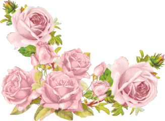 iloveflowers flowers flores pink roses