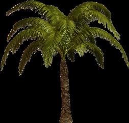 palma freetoedit