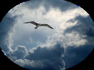 sky bird clouds