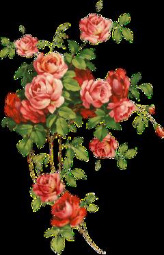 flowers rose red rosso fiori