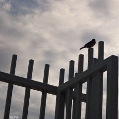 hudsonriver newyorkcity freetoedit birdonafence silhouette