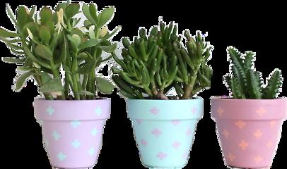plant cactus flower paint pastel