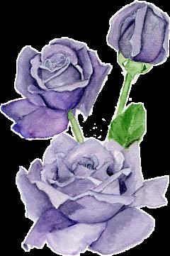 purple rose flowerpurple flower freetoedit