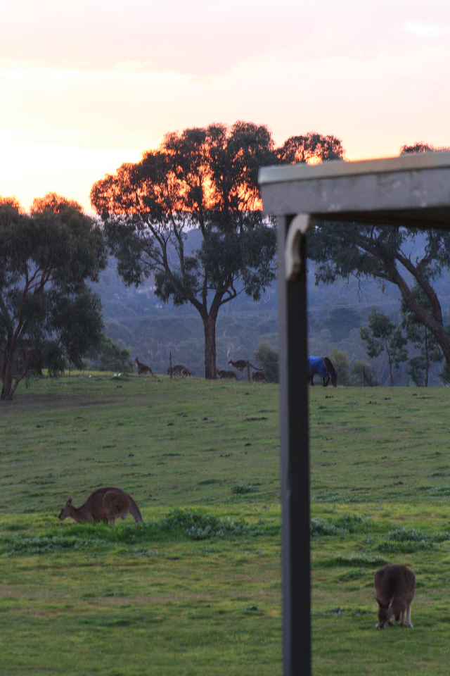 #FreeToEdit #KangarooJump