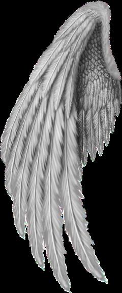 angel wings freetoedit