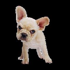 ftestickers dog freetoedit
