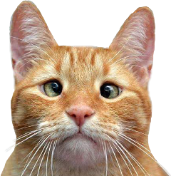 cats cat cute gato gatos freetoedit