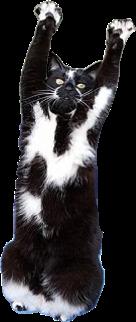 ftestickers freetoedit cat handsup