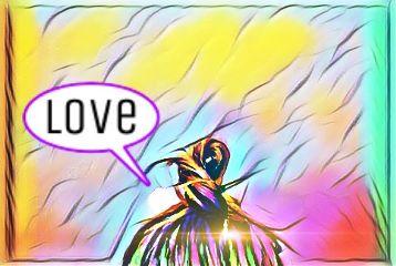love art california summer colourful