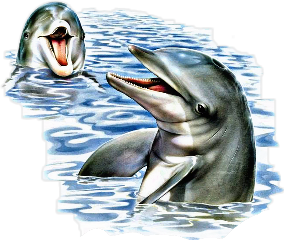 fteseacreatures stickers dolphins freetoedit