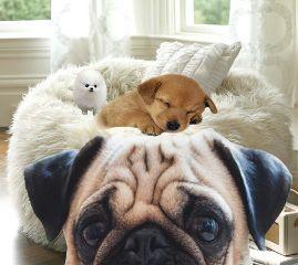 freetoedit doglovers awwhimsleep chubbypugs selfiegamecrazy