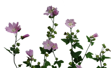flowers aesthetic tumblr freetoedit