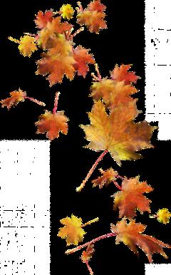 ftestickers leaves atumn freetoedit