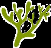 stickers seacreature seaweed freetoedit