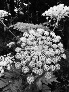 dpcblackandwhite freetoedit bnw flower forest