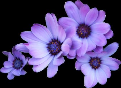 #flower #tumblr #purple