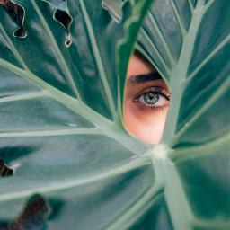 FreeToEdit leaf plant tree nature eye girl people