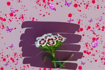 freetoedit flower colorful