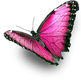 pink butterfly ftestickers
