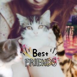 freetoedit remixed cats friends family