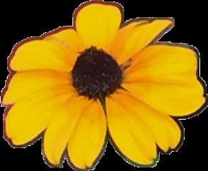 yellow flower yellowflower freetoedit