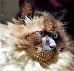 dpccat cats cat kitty petsandanimals