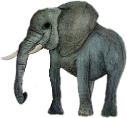 elephant pets animal wild drawing freetoedit