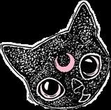 cat cats gato gatos black