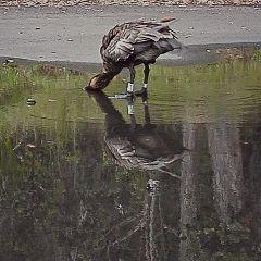 freetoedit ducks bathroom bathroomselfie photography