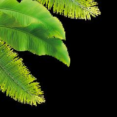 palmtree tropical ftestickers freetoedit