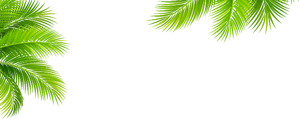 palmtree tropical ftestickers freetoedit