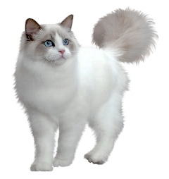 freetoedit ftestickers cat