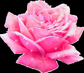 pink rose sparkle flower freetoedit