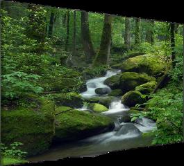 forest forrest green freetoedit