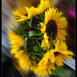 photography flowerarrangement bunchofflowers sunflowers nature